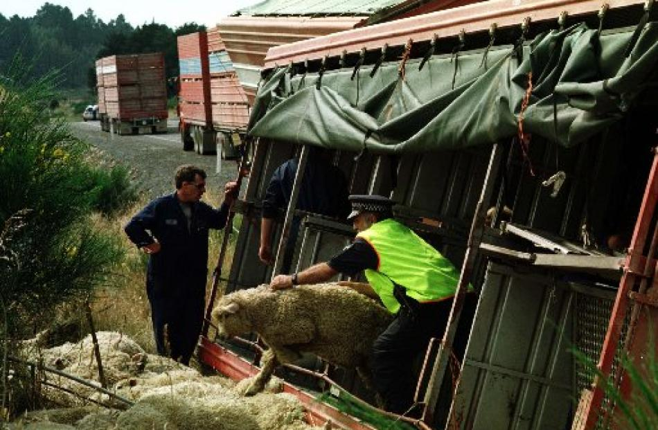 Mr Parker hauls a live lamb out of a crashed stock truck trailer near Dunedin in 1999.