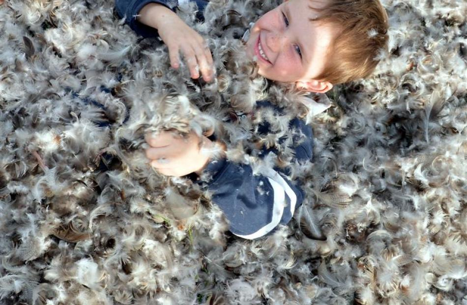 Flynn Whitley (6) plays in the feathers while the ducks are  being plucked yesterday.