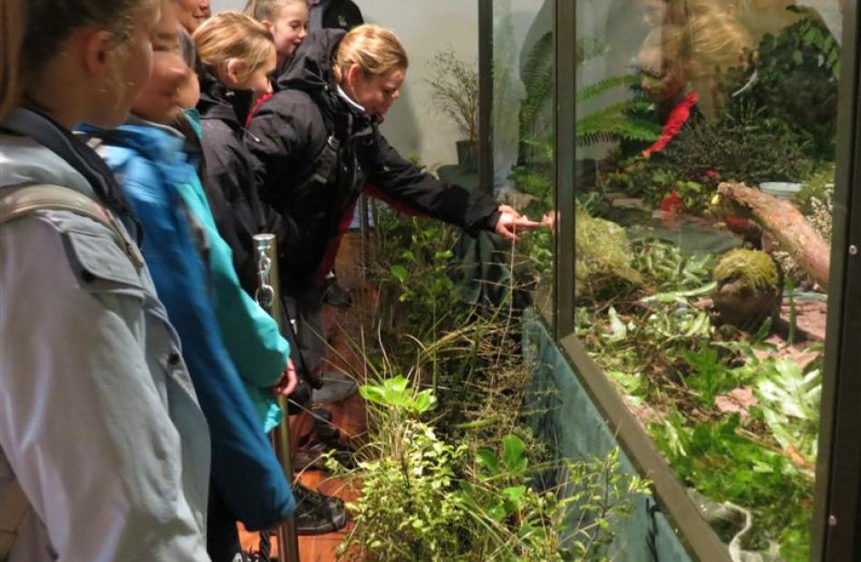 Pupils from Queenstown Primary School meet two of the three  kakapo chicks on display at the...
