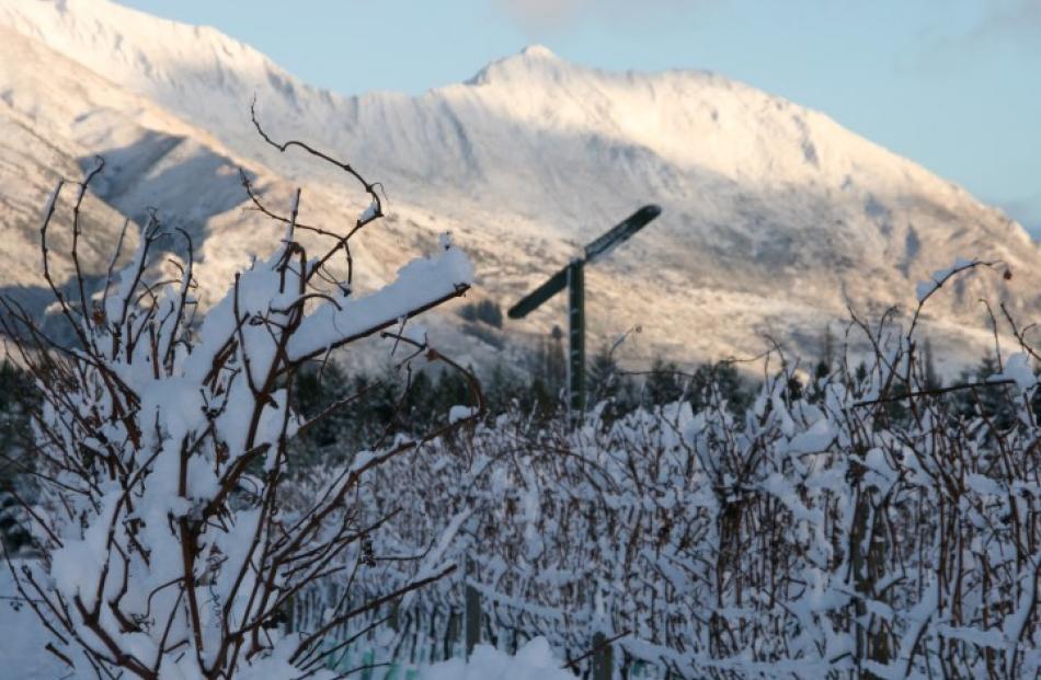 Early morning snow at Aitken's Folly vineyard in Wanaka. Photo Ian Percy