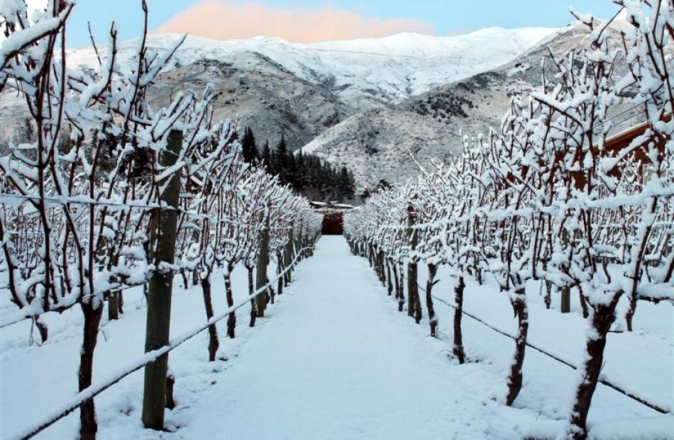 Snow covers the Glandovey Vineyard, Wanaka. Photo by Edward Howarth.