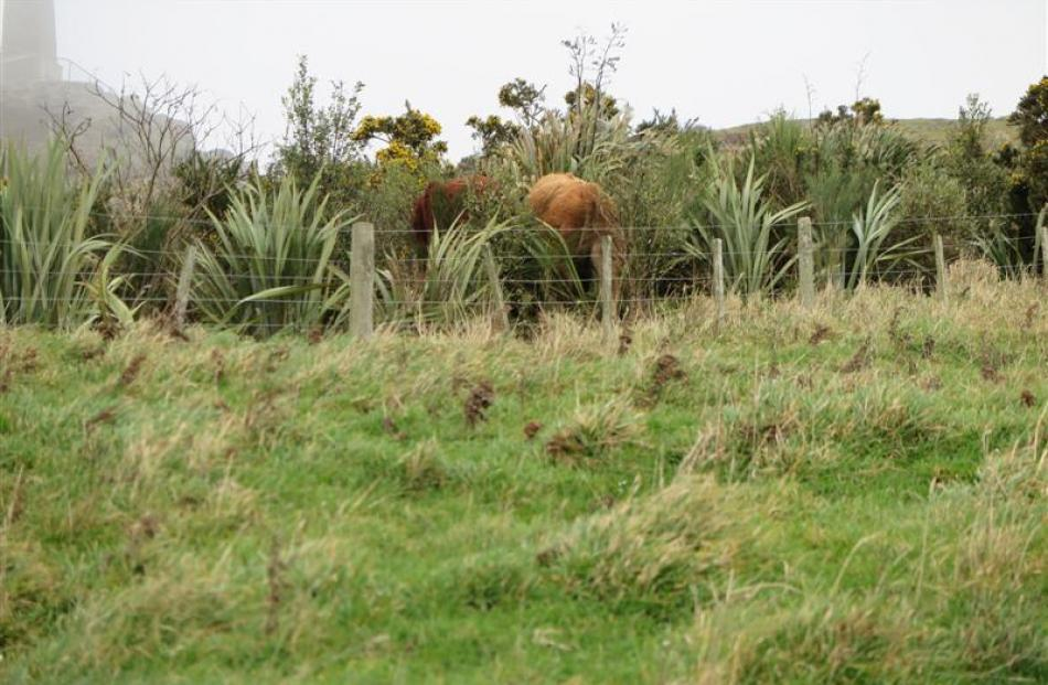 The culprits made their escape into the bush as we approached the Soldiers' Monument track....