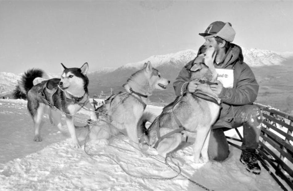 1992:  Claus Caderas  with his  Siberian huskies on Coronet Peak skifield. Photo by Barry Harcourt.