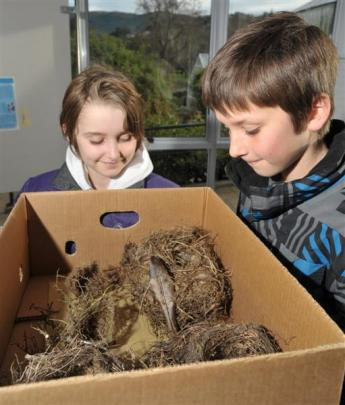 Samantha (10) and Oliver Bixley (11), both of Dunedin, inspect bird's nests.