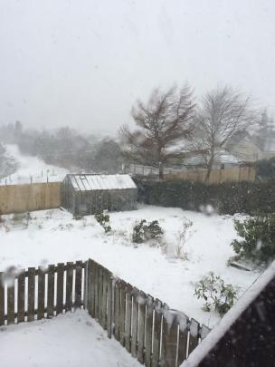 Snow coats a backyard in Halfway Bush. Reader photo by Akmal Barikzai