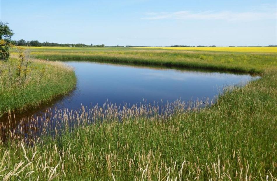 A wetland created as part of on-farm water retention projects to reduce flooding and run-off  in...