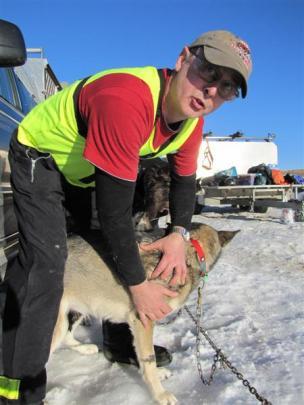 Six-year-old Alaskan husky Petra gets a pre-race massage from owner Alan Raki Raki, of Invercargill.