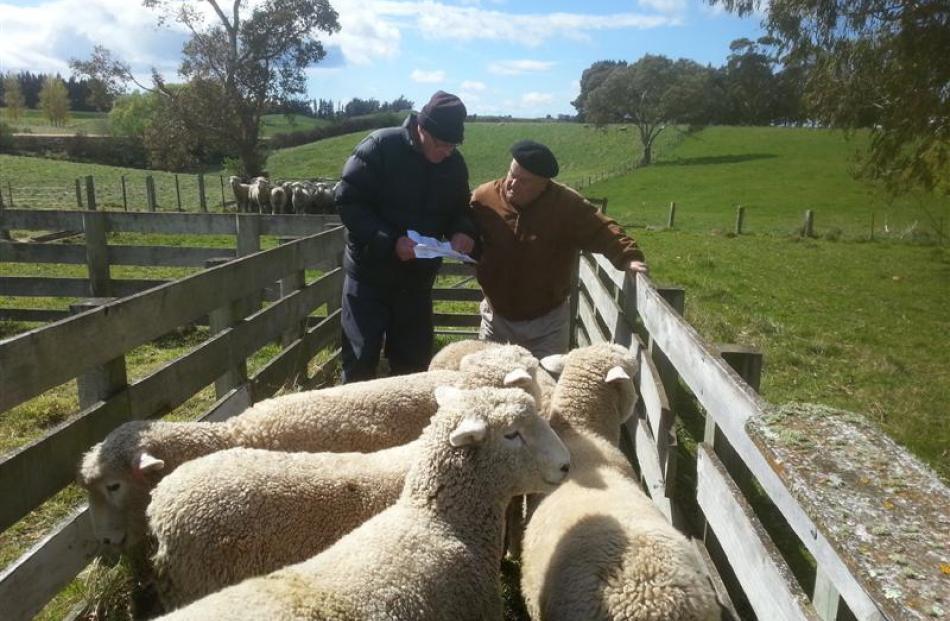 David Robertson (left) inspects Romney rams with Enrique Larraechea from Uruguay.