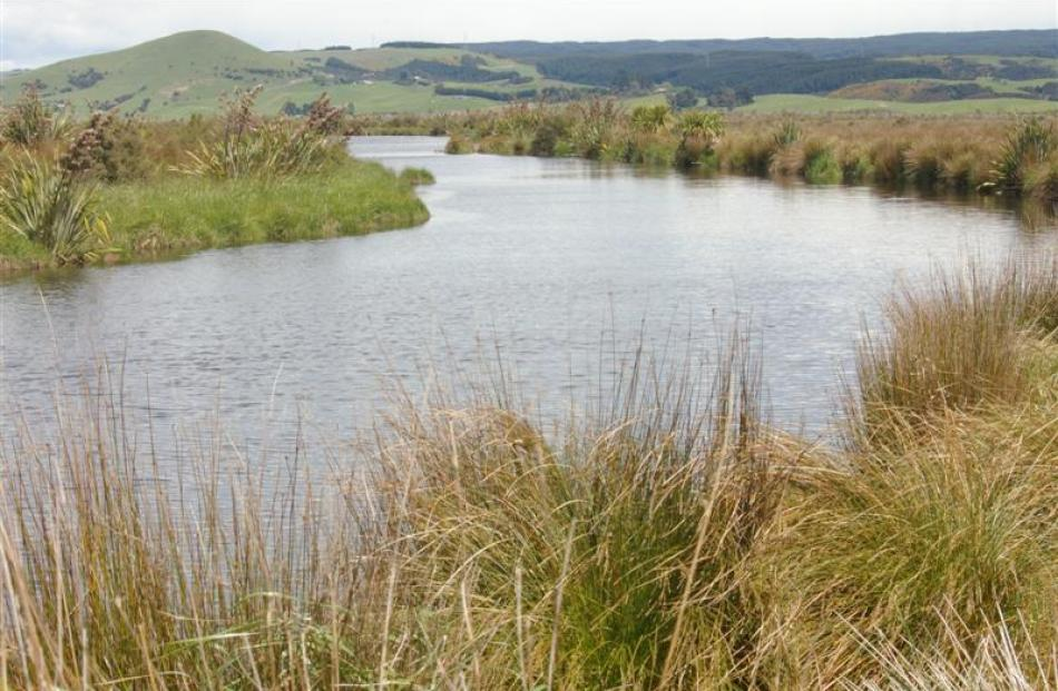 Channels throughout the Lake Waihola Waipori Wetlands have opened up since spraying commenced...
