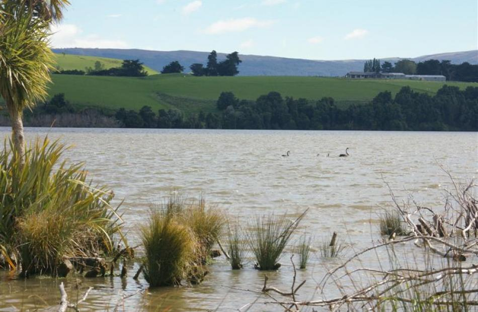 Lake Waihola is a shallow, tidal lake that makes it susceptible to reduced water flow and...