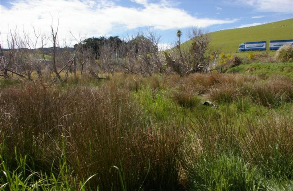 Many people who drive by the Lake Waihola Waipori Wetlands do not know the extent of the wetlands...