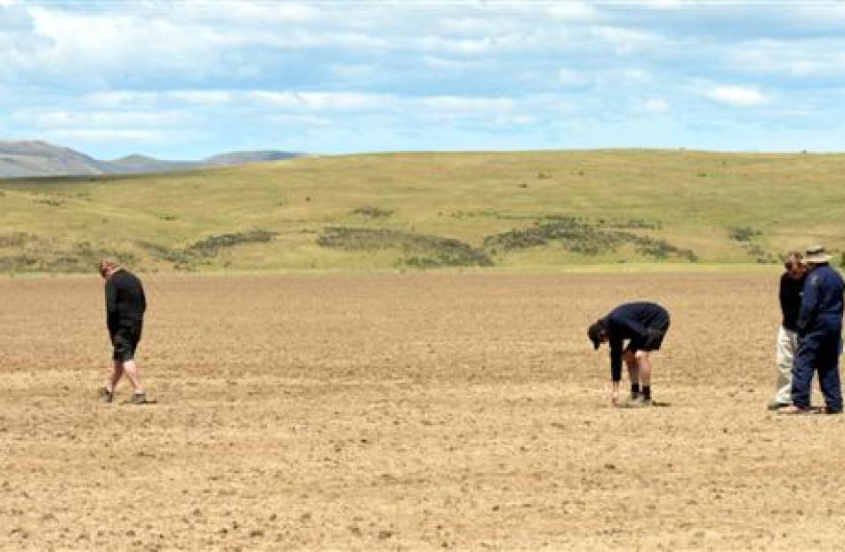 Field day attendees inspect a paddock of fodder beet.