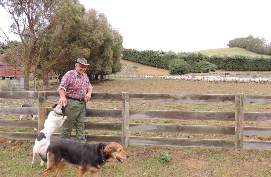 Kauru Hill farmer Ross Ewing, with heading dog Boss and huntaway Joy, sold his ewe lambs...