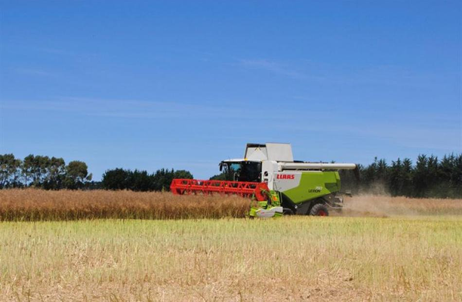 A canola paddock, boasting a world-record yield, is harvested on the lower Waitaki Plains, north...