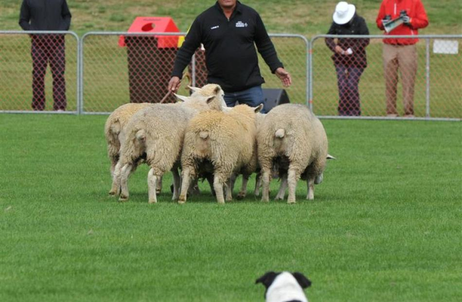 Bob Bruce and his dog Trump perform during the NZ Inter Island Challenge sheep dog trials.