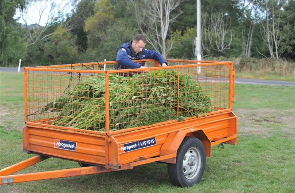 A police officer places cannabis plants into a trailer.