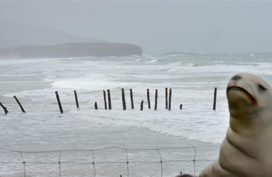 The last of the 1921 double-row groynes as they stood at St Clair this week, with the sea lion...