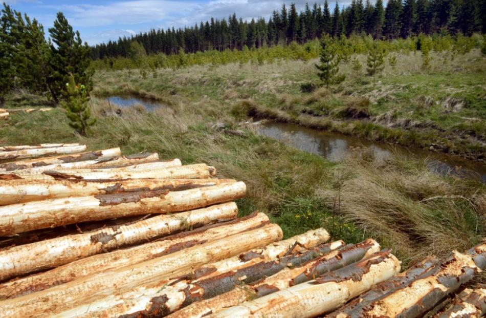 Logging and koura farming operate alongside each other in Naseby Forest.