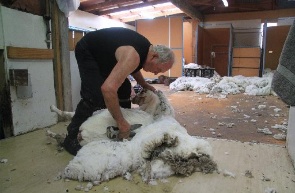 Casserly picks up a spectator as he shears a merino. Photos by Hamish MacLean.