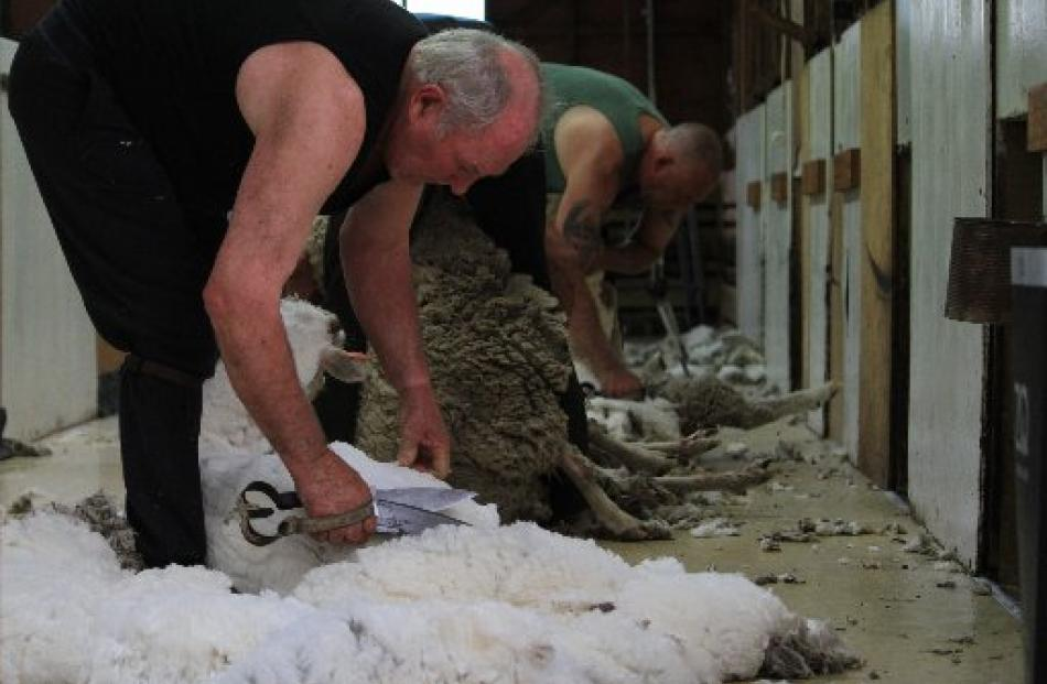 Peter Casserly (front) says blade shearers do not work as gangs, they work as teams. Ross Kelman,...