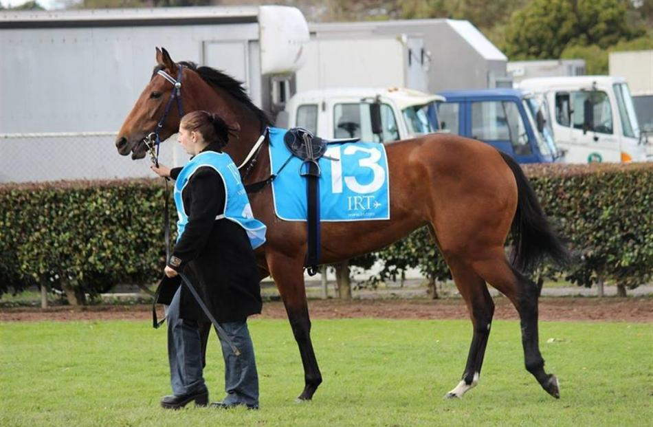 Racehorses Aotearowerand Sisterhood (pictured) have proved as rewarding emotionally as...
