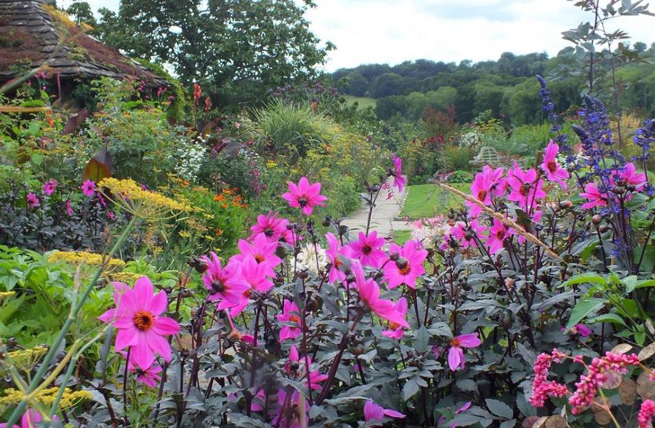 In the area behind the manor, late summer colour includes dahlias.