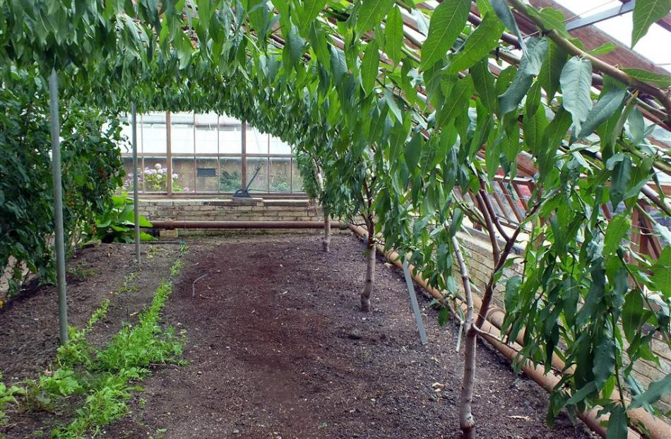 The Victorian peach house has been restored and replanted.