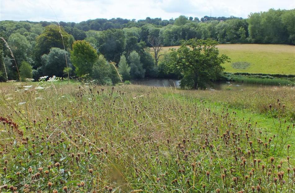 The wildflower meadow in late summer with Robinson's lake below it.