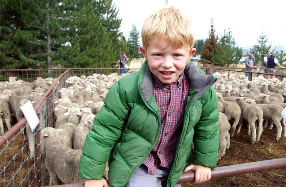 Ben Williamson (5), of Glenbrook Station, inspects the yarding.