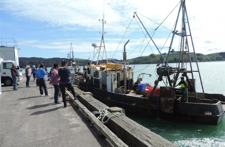 A fishing boat  with its catch arrives at Raglan wharf.