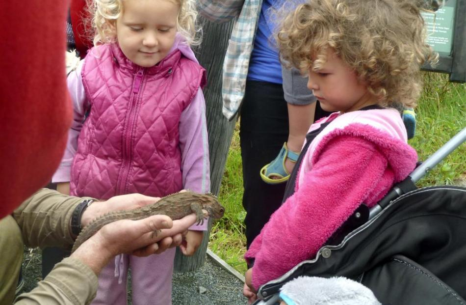 Children on a Nature Watch day in a close encounter with one of the tuatara. Photo: Alyth Grant