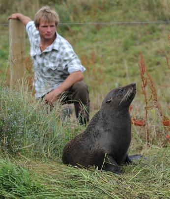 Images of fur seals from earlier ODT stories.