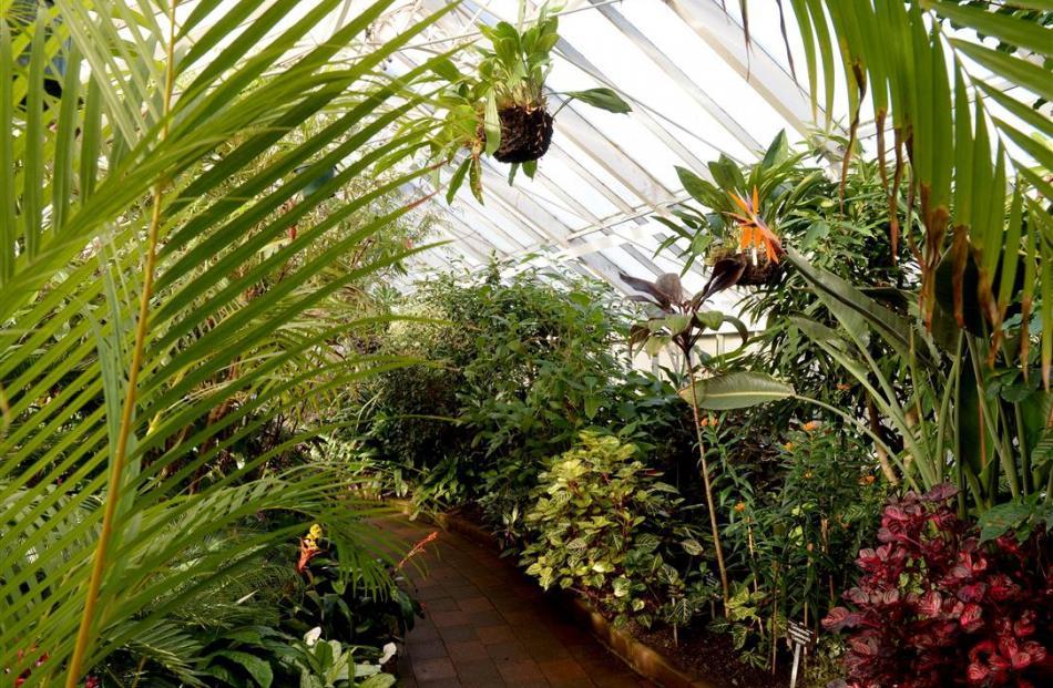 In the Winter Garden Glasshouse at Dunedin Botanic Garden. Photo: Linda Robertson.