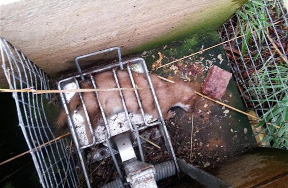 Emptying traps is not for the faint-hearted. Inflicting death on animals gives no pleasure, but a...