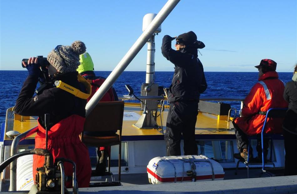 Dunedin ornithologist and consultant Graham Parker (centre)  observes Shepherd's beaked whales...