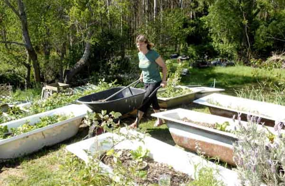"Ms Upton works in her ""bath garden"" where she grows most types of vegetables."