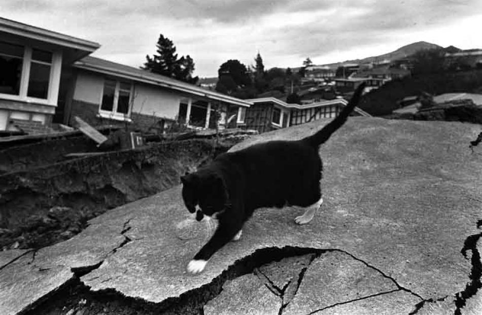A cat carefully negotiates the destroyed pavement.