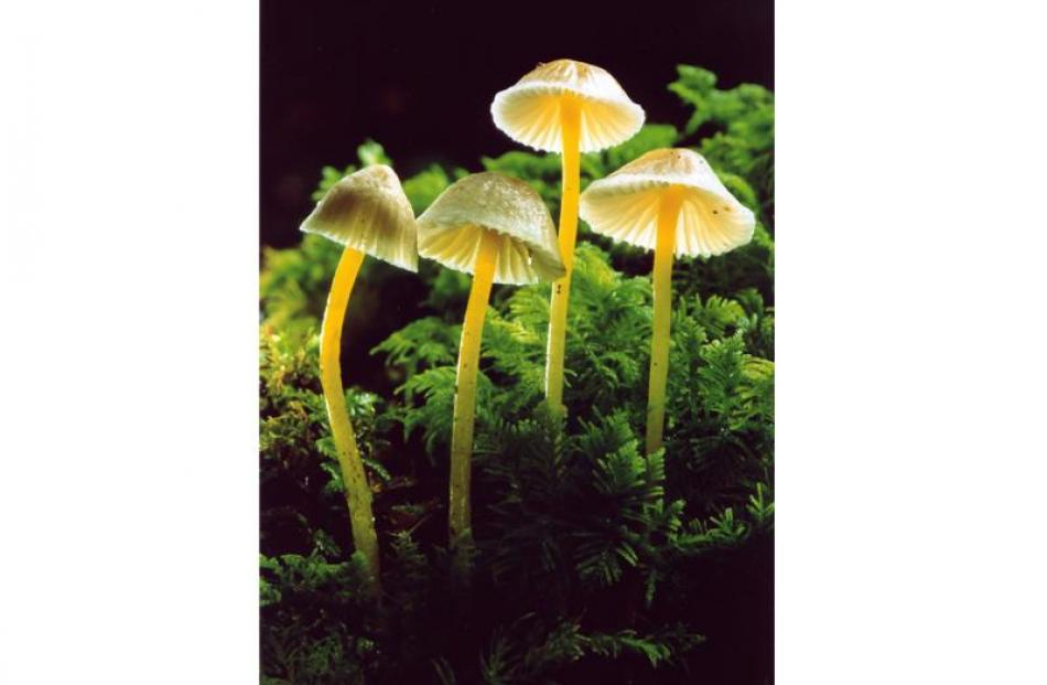 Forest fungi (2002)... Avoiding camera shake and getting light in behind the subject were the...