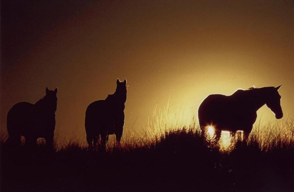 "Sunset steeds (2008)... ""It was a bit of a fluke,"" Gillean Booth says of the photo of three..."
