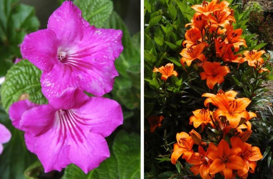 Bright flowers add colour to the garden beds.