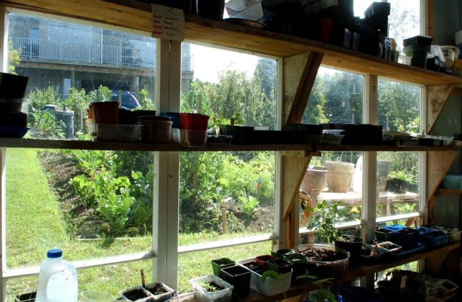 Many of the plants in the Hurring garden were propagated in this shed built with old windows.