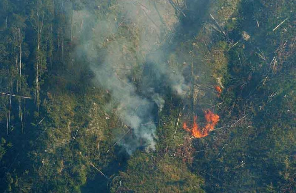 Fire spreads from the cut area toward mature trees. Photo by Gerard O'Brien.