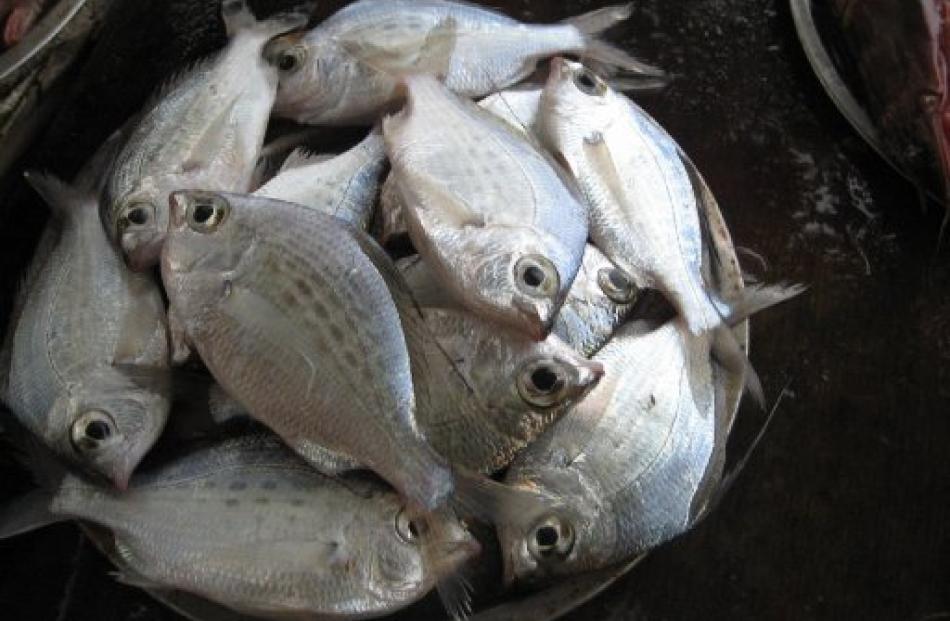 Fresh fish from the Arabian gulf. Photos by Charmian Smith.