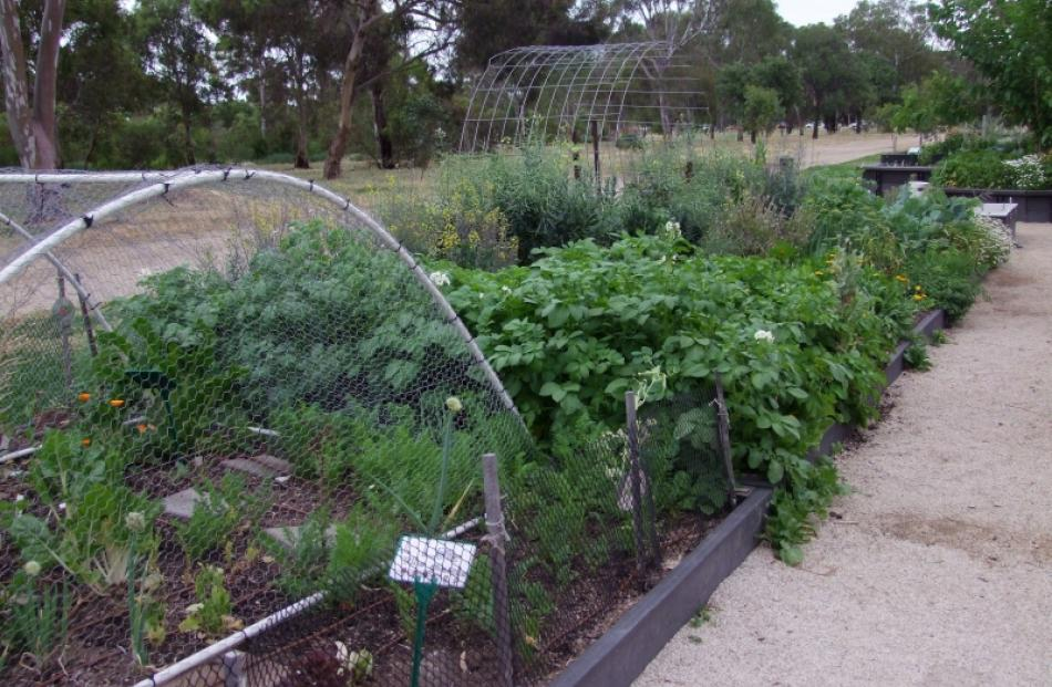 Part of the Walyo Yerta community garden within the Adelaide Botanic Garden. Photo by Gillian Vine