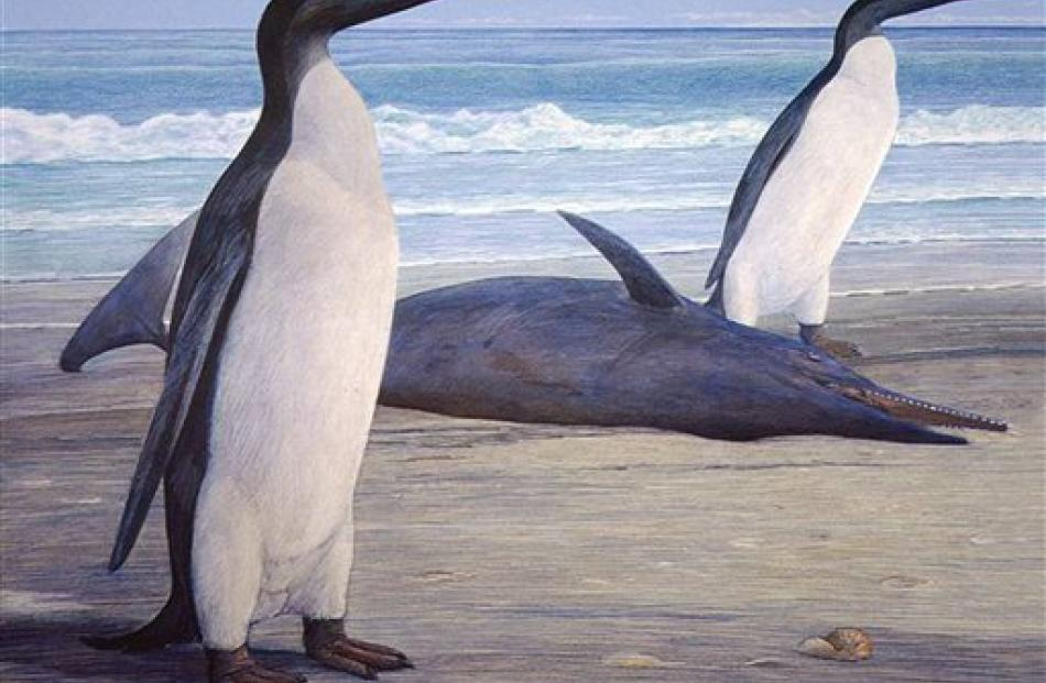 A giant penguin called a kairuku is seen in this graphic illustration. AP Photo/University of Otago)