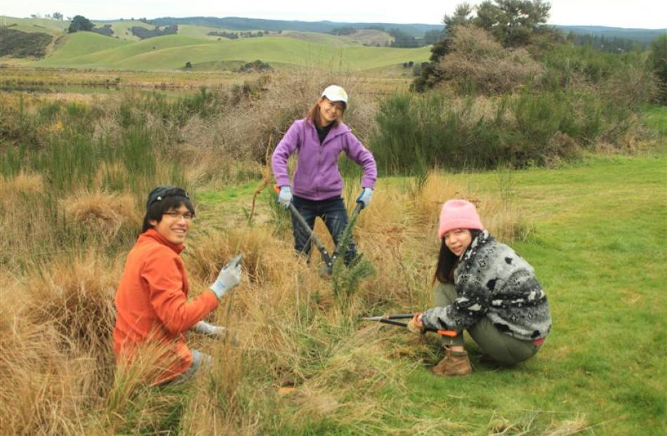 A group of tourist volunteers help with  weeding at Sinclair Wetlands (left). Photos supplied...