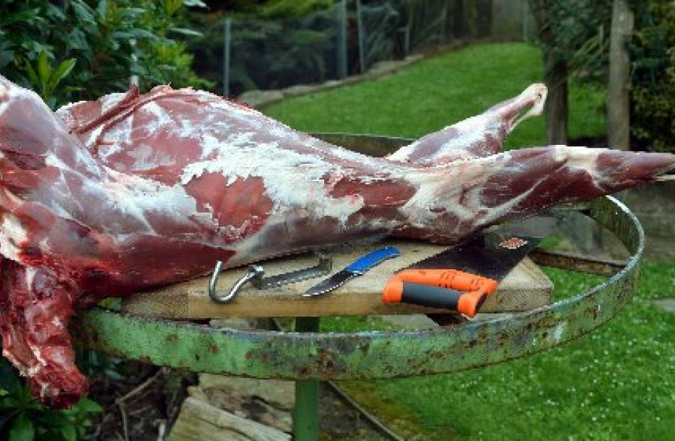 A young tahr ready to be butchered for the freezer. Tahr tastes similar to the best cuts of...