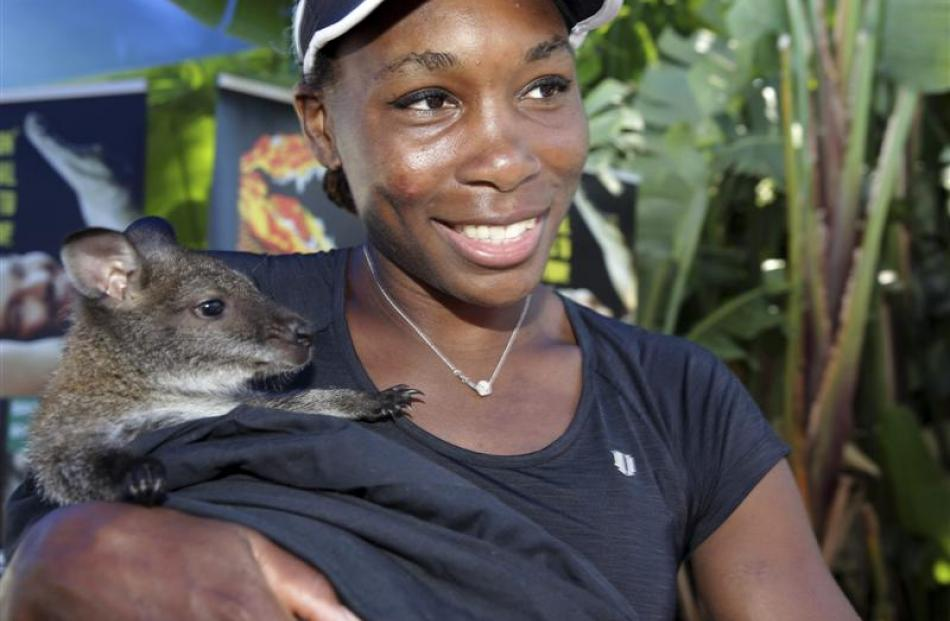 American Venus Williams holds a wallaby in the players' room before next week's Australian Open...