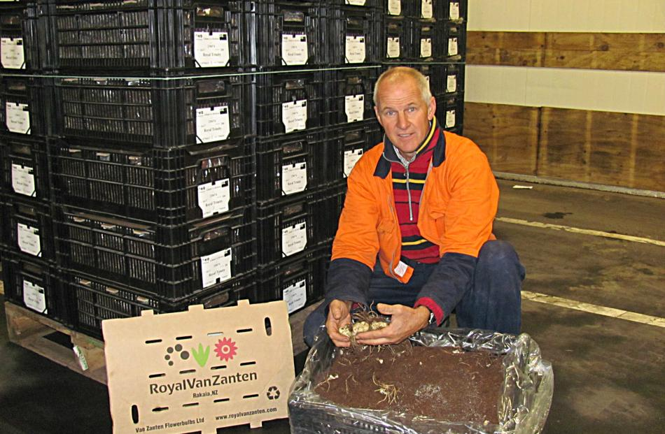 Anton Warmerdam checks the condition of dormant lily bulbs in a chiller. Photo by Maureen Bishop