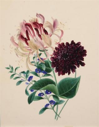 Artist unknown, Study of Honeysuckle, watercolour.